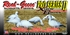 Picture of **FREE SHIPPING*** Pro Series II Snow Goose Silhouette Decoys by Real Geese Decoys