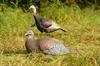 Picture of **FREE SHIPPING** Laydown Hen/Jake Combo Turkey Decoys - Merriam by Greenhead Gear GHG