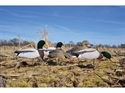 Picture for category Field Duck Decoys