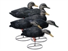 Picture of **FREE SHIPPING** Magnum Full-body Black Duck, Variety 6pk by Higdon Decoys
