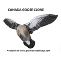 Picture of Canada Goose - SINGLE