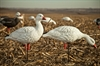 Picture of **FREE SHIPPING** AXP Full Body Snow Goose Decoys 10pk by Avian X Decoys