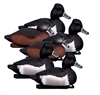 Picture of **FREE SHIPPING** Standard Ringneck Duck Decoys 6pk by Higdon Decoys