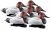 Picture of **FREE SHIPPING**  Oversize Canvasback Duck Decoys (FOAM FILLED) by Greenhead Gear