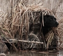 Picture for category Dog Blinds
