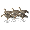 Picture of *FREE SHIPPING* Pro-Grade XD Specklebelly Goose Decoys Harvester 6 pack by Greenhead Gear