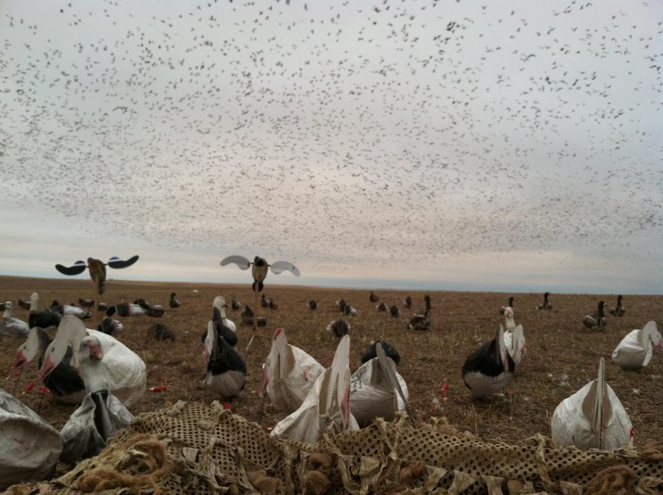 ghg canada goose decoys for sale